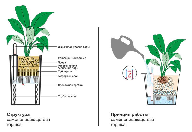 Как сажать комнатные растения 53